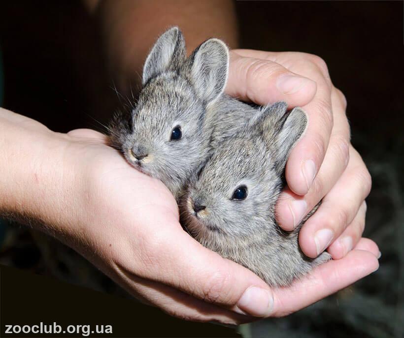Фото айдахского кролика