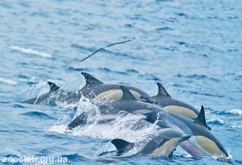 Фото дельфина обыкновенного