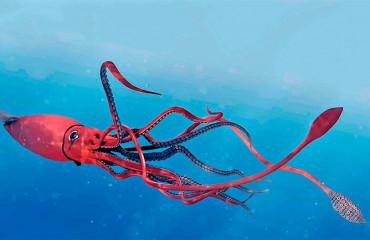 Гігантський кальмар, або архітеутіс