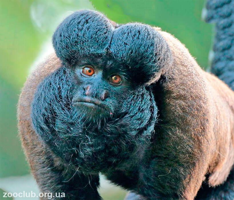 фото сатанинской обезьяны