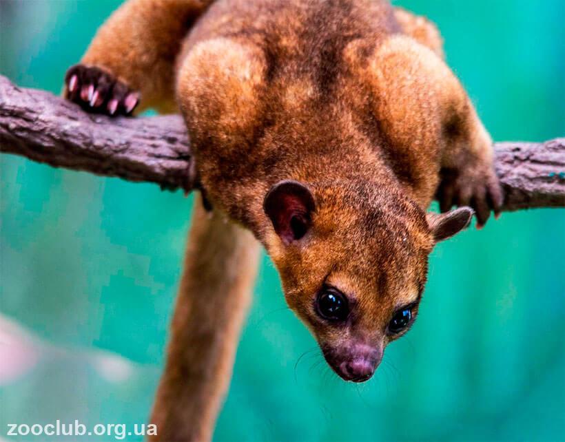 медовый медведь фото