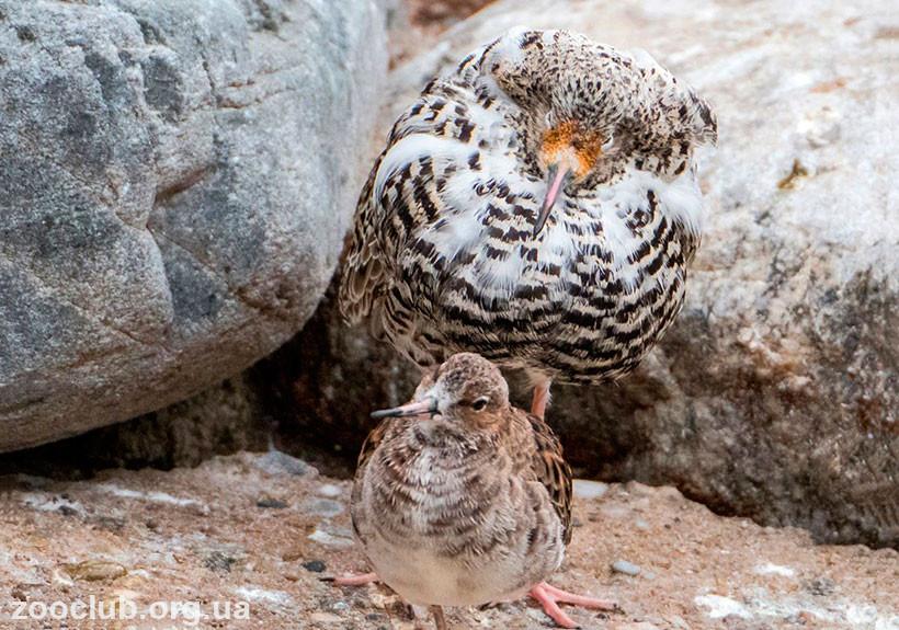 турухан гнездо