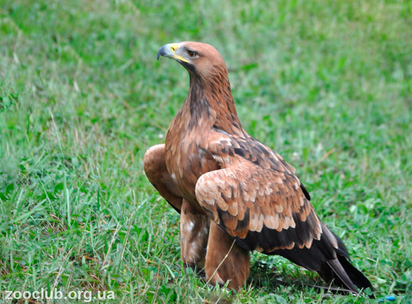 солнечный орел фото