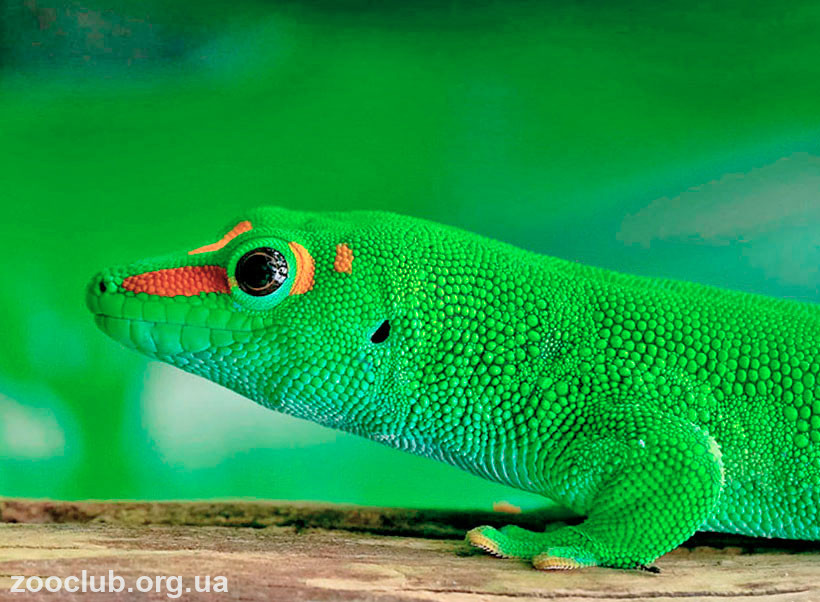 Значение гекконов в природе