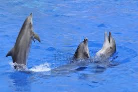 1353509345 d24 Дельфин афалина