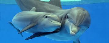 1353509400 d12 Дельфин афалина