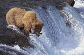 1374331699 m33 Медведь бурый евразийский