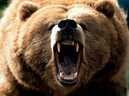 1374331700 m1 Медведь бурый евразийский