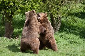 1374331703 m4 Медведь бурый евразийский