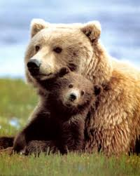 1380964114 m4 Медведь гризли